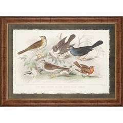 Buy Paragon Birds I 46x34 Framed Wall Art  on sale online