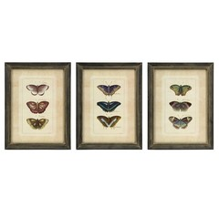 Buy IMAX Worldwide Butterfly Collection Wall Art (Set of 3) on sale online