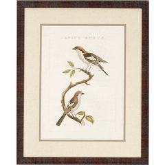 Buy Paragon Nozeman Birds I Framed Wall Art (Set of 2) on sale online