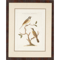 Buy Paragon Nozeman Birds II Framed Wall Art (Set of 2) on sale online