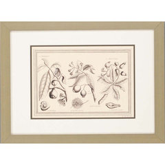 Buy Paragon Sepia Botanicals II Framed Wall Art (Set of 3) on sale online
