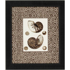 Buy Paragon Shells Framed Wall Art (Set of 4) on sale online