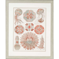 Buy Paragon Sophisticated Sealife IV Framed Wall Art on sale online