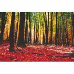 Buy Yosemite Home Decor Autumn Forest 47x32 Wall Art on Glass on sale online