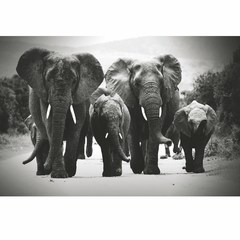 Buy Yosemite Home Decor Elephants II 47x32 Wall Art on Glass on sale online