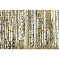 Buy Yosemite Home Decor Forest I 47x32 Rectangular Wall Art on Glass on sale online
