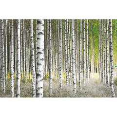 Buy Yosemite Home Decor Forest II 47x32 Rectangular Wall Art on Glass on sale online