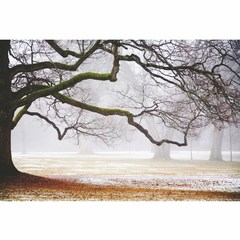 Buy Yosemite Home Decor Leafless Tree 47x32 Rectangular Wall Art on sale online