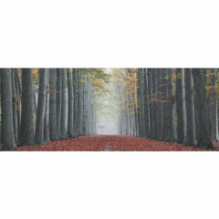Buy Yosemite Home Decor Mistifying Forest 63x24 Rectangular Wall Art on sale online