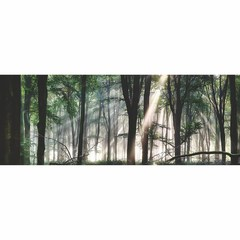 Buy Yosemite Home Decor Trees Glow I 71x32 Wall Art on Glass on sale online