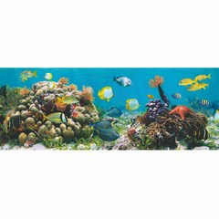 Buy Yosemite Home Decor Under The Sea II 47x24 Rectangular Wall Art on sale online