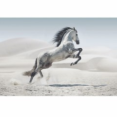 Buy Yosemite Home Decor White Stallion II 47x32 Rectangular Wall Art on sale online